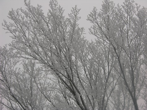 In winter, trees dominate the eye and gladden the soul when they are dressed in hoar frost.