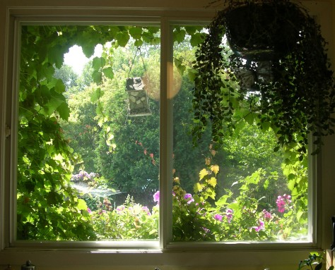 The view from my ktchen window in summer. Today, it is whie with sow but I see the colour in my mind's eye.