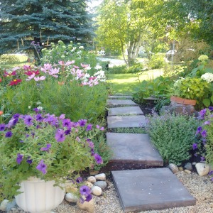 The new garden with its crooked stepping stones that the deer love.